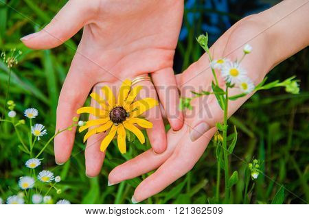Young Woman holding a Black-Eyed Susan Flower