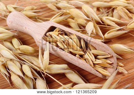 Organic oat grains on wooden spoon, healthy nutrition