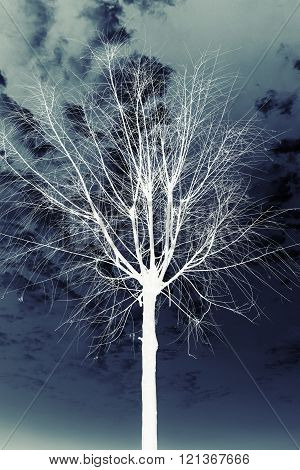 White Silhouette Of Small Leafless Tree