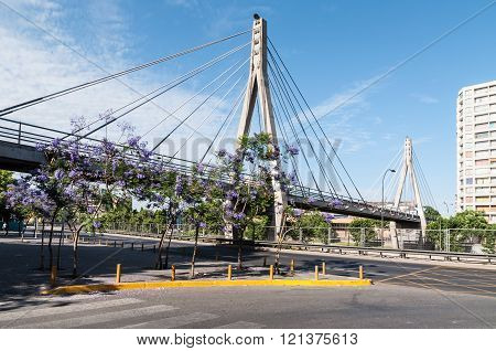Jacarandas In Bloom Near The Huerfanos Footbridge - Santiago, Chile