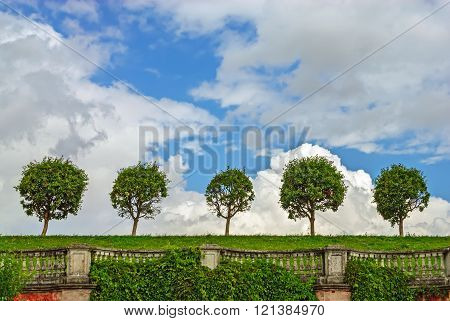 Trees in line on lawn and vintage balustrade