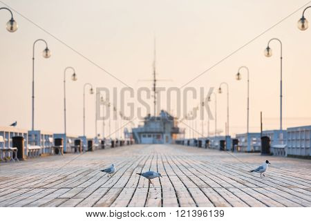 Seagull on the wooden pier