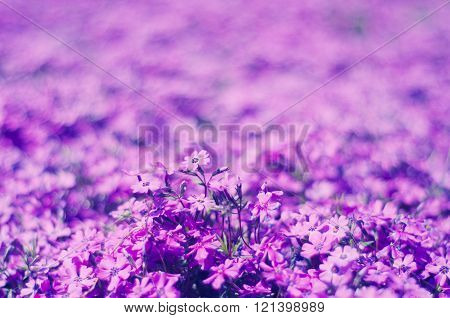 Bright Violet Flowers