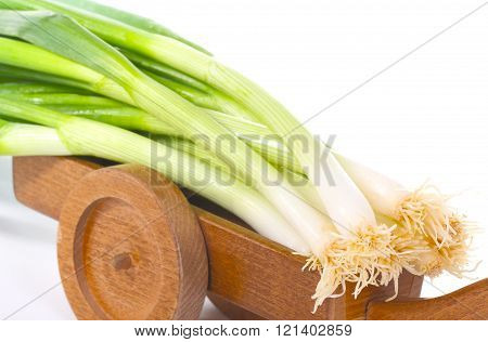 Onion harvest spring onions