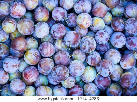 Indigo-color plum fruits / Ripe Plums Background / close-up. Selective focus. ** Note: Visible grain at 100%, best at smaller sizes