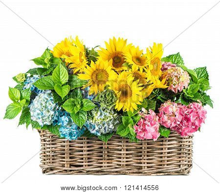 Sunflowers And Hortensia Blossoms. Fresh Flowers