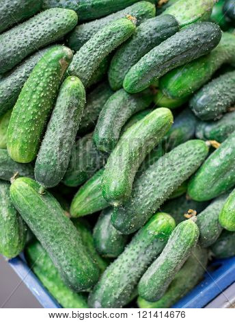 Pile of fresh green cucumbers close-up. Selective focus.