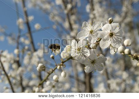 bee on flower tree and blue sky