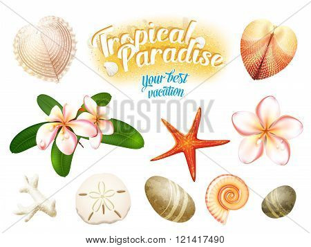 Set of tropical nature objects: sea shells, plumeria flowers frangipani sand dollar, starfish and wa