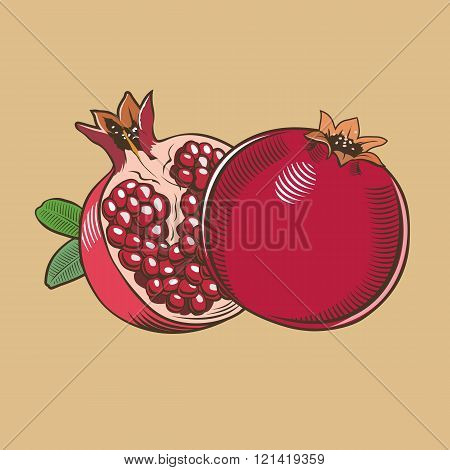 Pomegranates in vintage style. Colored vector illustration
