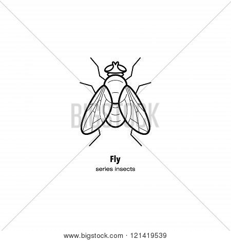 Vector illustration of an insect pest fly. Insect in a modern style mono line isolated on a white background. Black and white image of an insect.
