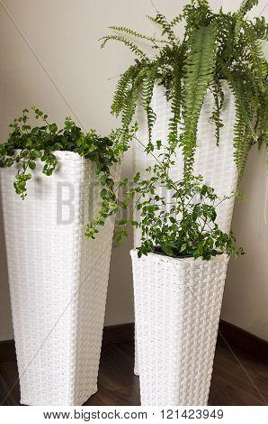 Potted plants in wicker pots.
