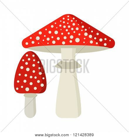 Amanita poisonous mushroom, isolated vector amanita on white background. Fly agaric or fly Amanita mushroom, Amanita muscaria.