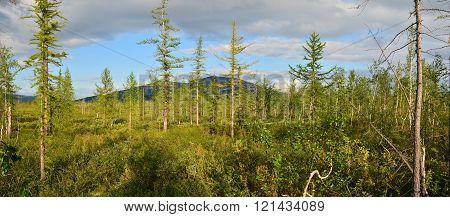 Panorama Of The East Siberian Tundra.