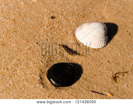 Stone And Shell On The Beach