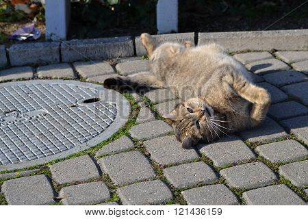 Lying cat basks in the Sun 28.12.2015 Pieštany Slovakia