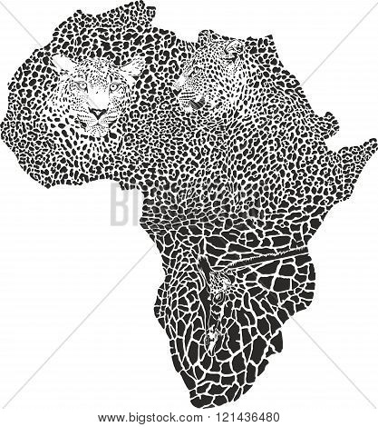 Leopards and giraffe on the Africa