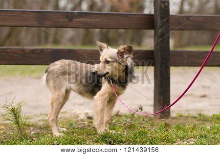 Stray mixed breed dog