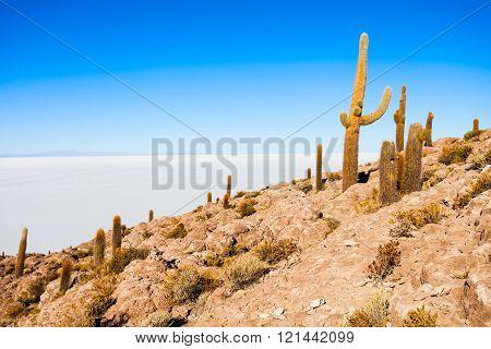 Cactus Island, Uyuni