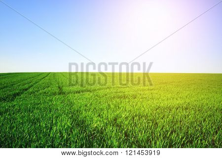 Green field and clear sky on a sunny day
