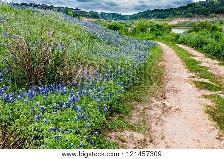 Old Dirt Road In A Field Of Texas Bluebonnet Wildflowers
