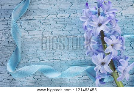 Blue Holiday Romantic Background With Hyacinth
