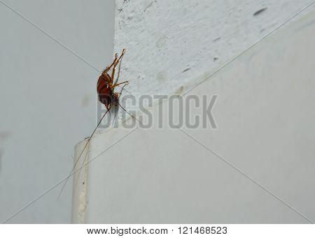 cockroach climbing on bathroom wall