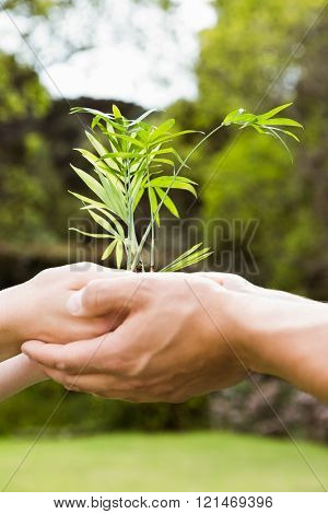 Close-up of young couple holding a sapling