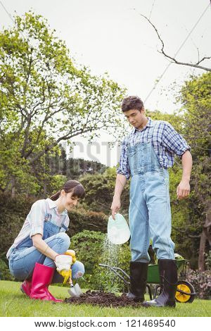 Young couple watering a sapling in garden