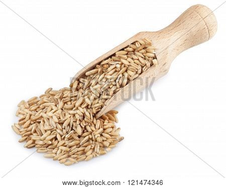 Wooden Scoop With Oat Grains Isolated On White Background