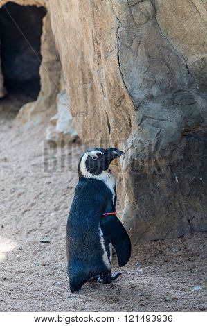 Penguin With Tag On Fin