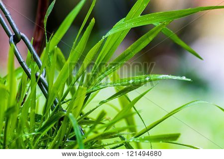 Grass Covered With Water Droplets
