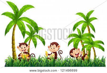 Three monkeys eating bananas illustration