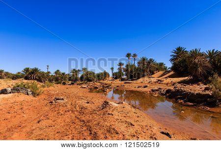 water in the oasis, Sahara desert