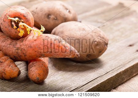 Vegetables crude carrots with sprouts and potatoes against from gray boards. Close up small depth of sharpness