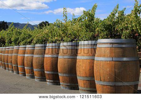 Wine Barrels In Napa