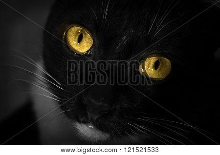 eye cat black cat vision eye yellow eye cat yellow close up