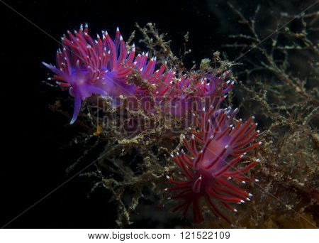 purple invertebrate