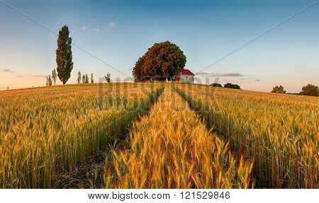 Countryside Way