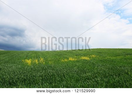 Green field with rain clouds