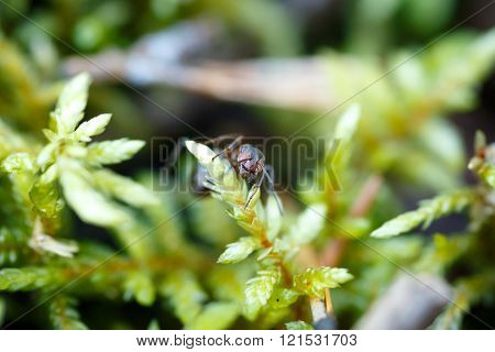 Ant macro background forest Focus head ant