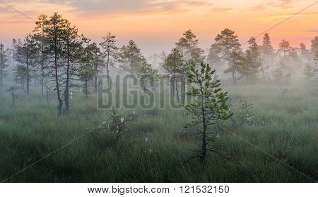 Misty bog landscape in the morning before the sunrise