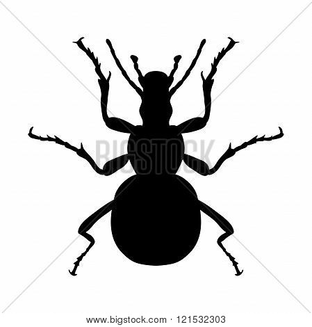 Insect silhouette. Sticker ground beetle bug. Carabidae coleoptera. Vector