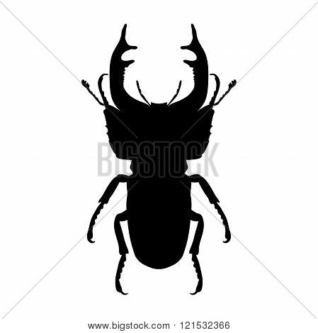 Insect silhouette. stag-beetle. Lucanus cervus. Sketch of stag-beetle. stag-beetle isolated on white