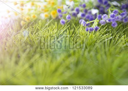 wild flowers onthe meadow. meadow on a hillside covered with wild flowers and grass.