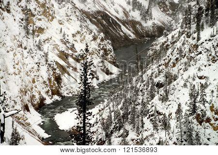 Winter River Yellowstone