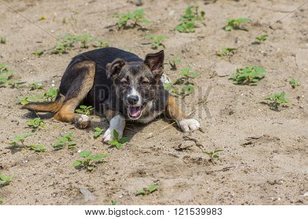 Adorable street puppy having rest in a sandy place