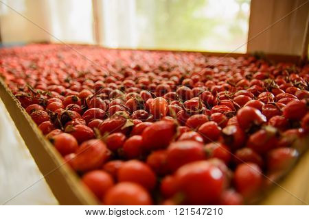 The Rosehip Is Dried On The Window