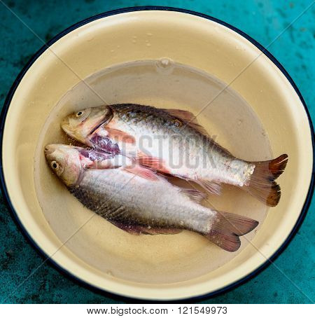 Purified fish is in a dish