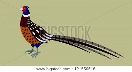 Cartoon detailed pheasant isolated on grey background vector illustration